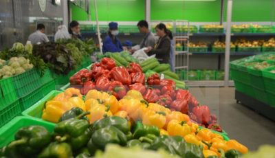 fruit and vegetable exports in nine months